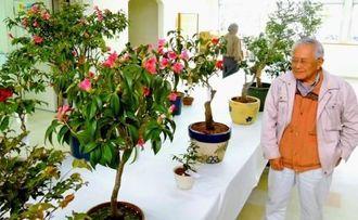 会場に運び込まれたツバキ=那覇市の市緑化センター