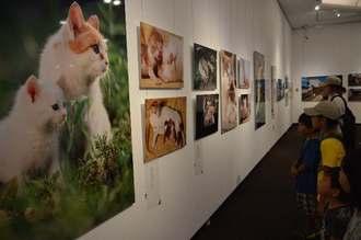ネコの写真に見入る観覧者ら=15日、浦添市美術館