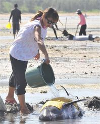干潮で動けなくなった小型クジラに海水をかけるなど心配そうに見守る市民ら=17日、石垣市・名蔵湾