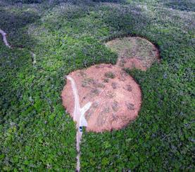 木の伐採がほぼ終わった様子の建設予定地N1地区。二つのヘリパッドが隣り合って造られる=17日、国頭村安波(提供、小型無人機から)
