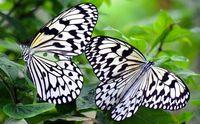 沖縄の「花とチョウの里」はど~こだ? 来月、両方楽しめるイベント開催
