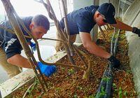 米兵ら7人 清掃活動/名護 二見区でボランティア
