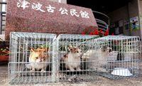野良猫増えた地域…不妊手術の捕獲へ 「殺処分を1匹でも減らしたい」