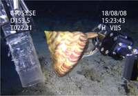 深海の神秘 光る魚と巻き貝を展示 沖縄美ら海水族で9月末まで