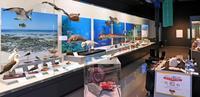 きょう開館10年、「海」テーマに特別展 沖縄県立博物館・美術館