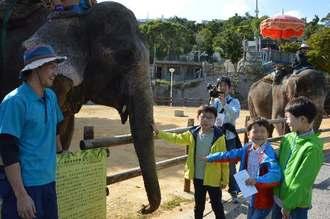 越冬のために沖縄こどもの国に来たブントーンに触れる子どもたち。右奥はトンサイ=14日、沖縄市・沖縄こどもの国