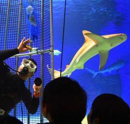 サメの水槽内でアクリルパネルを掃除する飼育員=本部町・沖縄美ら海水族館