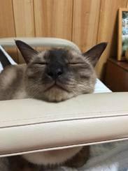 「さあお昼寝の時間にゃ!」昨年の夏、昼休みに家に戻り空調をつけたら、部屋に入ってきてお昼寝をはじめた愛猫 そらです。