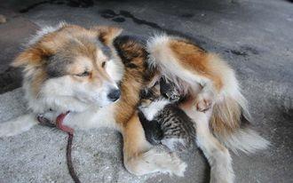 後ろ足をあげて2匹の子猫にお乳を与える雌犬のまーるー=18日、浦添市の丸亥オート