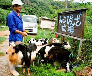 宮城正男さんが育てている島ヤギは8頭。それぞれに名前を付けており「ダイチ」(左手前)が一番の古株だ=今帰仁村今泊
