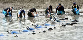 水路で遺留品を捜索する県警の捜査員=2016年5月24日、うるま市州崎