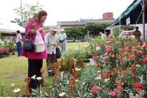 お気に入りの植木を探す来場者ら=8日、沖縄市登川・同市農民研修センター