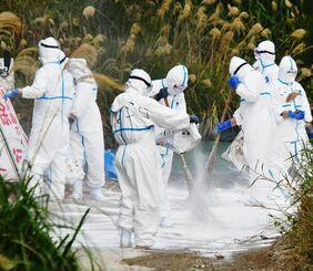農場近くの道に消石灰をまく防護服姿の作業員=8日午後2時3分、うるま市(田嶋正雄撮影)