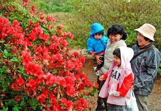 園に咲くツツジの花を見学する親子連れ=1日、東村平良・村民の森つつじ園