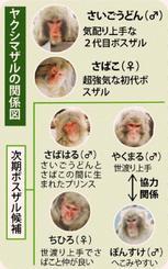 ヤクシマザルの関係図