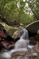 手つかずの森が残り、清流に恵まれて多様な生命を育んでいる世界自然遺産登録地の徳之島(南海日日新聞社提供)