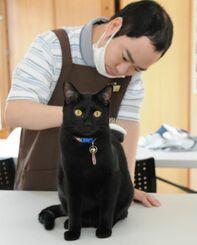 猫にブラッシングする「猫雑貨&カフェfukufuku」のスタッフ=4月20日、南城市知念の同店