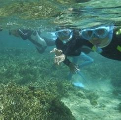 シュノーケルでサンゴ礁の生き物を観察する探検隊のメンバー=石垣市桴海、米原ビーチ
