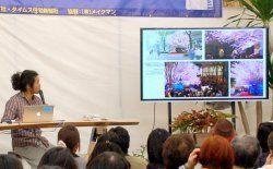 桜を紹介する清順さん=2月26日、沖縄県浦添市のホームセンター「メイクマン浦添本店」