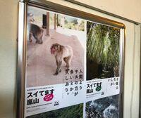 """新型コロナで京都・訪日客消滅――""""人よりサルが多い""""非常事態に迫る"""