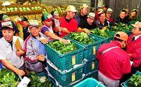 青果品薄 単価6割高/県中央卸売市場で初競り