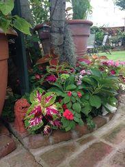 庭の植物の陰にはシーサーも。