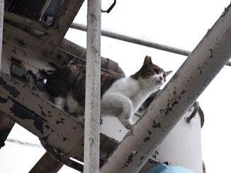 高さ約7メートルのアーケードの梁(はり)を移動するネコ=2017年9月15日、那覇市牧志の平和通り