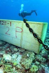 海底のサンゴ礁の上に沈められたコンクリートブロック=15日午後4時9分、名護市の大浦湾(伊藤桃子撮影)