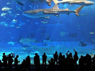 (資料写真)沖縄美ら海水族館