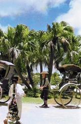 緑の木々と人力車/緑の木々の下を行く人力車。手前には割烹着の女性が写る