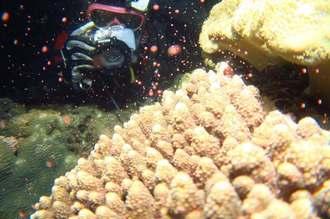 1日午後10時15分ごろ、北谷町の宮城海岸で確認されたサンゴの産卵(アルファダイブ代表の武富彰さん提供)