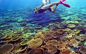 1998年の白化現象が起きる前は、辺野古沖の平島近くのリーフはテーブル状のサンゴが折り重なるように広がっていた=1998年1月(伊禮健撮影)