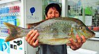 〔有釣天〕久米島の港で、渡名喜島の無人島で 大型タマン
