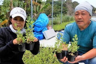 ヘナを植え付けする上瀧和夫さん、勝子さん夫妻=4月27日、うるま市・宮城島