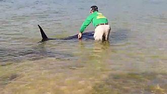 西表島の南風見田の浜に打ち上げられたクジラの子(読者提供)=1月15日撮影