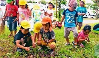 枯れ葉などのごみ拾いをする園児ら=23日、石川庁舎周辺