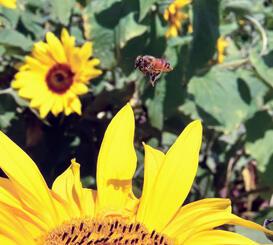 ミツバチもあったかそうですね