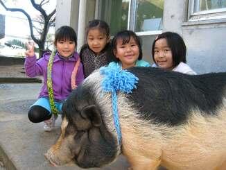 マフラーを巻いてもらったぷりんちゃん=2009年1月(大山幼稚園提供)