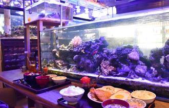 鮮やかな魚を眺めながら、ゆったりとした雰囲気で食事が楽しめる