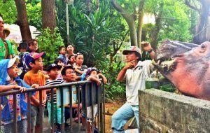 カバの特徴を説明する飼育員の話に聞き入る来園者=沖縄こどもの国