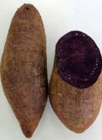 紅イモの新品種を開発 ゾウムシ被害減、色素2倍