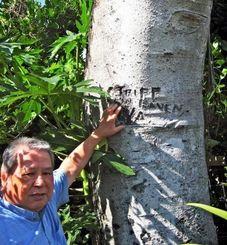 玉城松次さんの庭のクワノハエノキに残された70年前の米兵の落書き=今帰仁村今泊