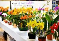 春の沖縄彩るラン、名護・道の駅許田に咲く 24日まで