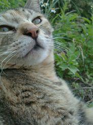 「まどろみ」近所の遊歩道を歩いていたら草むらにちょこんと座っていました。人慣れしているようで近距離で撮影させてくれたニャンコでした。
