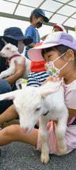 学校を訪れたヤギを抱っこする1年生の児童ら=13日、恩納村・山田小学校