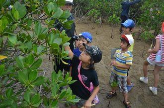 アンパルの自然を守る会の案内で、ヤエヤマヒルギの種子を観察する名蔵小の子どもたち=5月14日、石垣市名蔵
