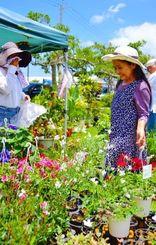 ゼラニウムなど色鮮やかな草花を品定めする来場者=6日、沖縄市登川の市農民研修センター