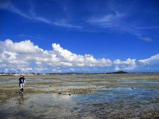 那覇市に奇跡的に残された生物多様性の宝庫、大嶺海岸。(High-tosh氏撮影)
