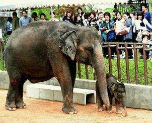産まれたばかりの子ゾウの琉美(るび)をひと目見ようと駆け付けた親子連れ=2015年4月11日、沖縄市・沖縄こどもの国