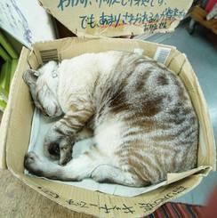「箱入りムスメ」那覇市平和通り 店先のダンボールの中で熟睡中